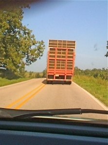 one of the many chicken trucks on the highway...