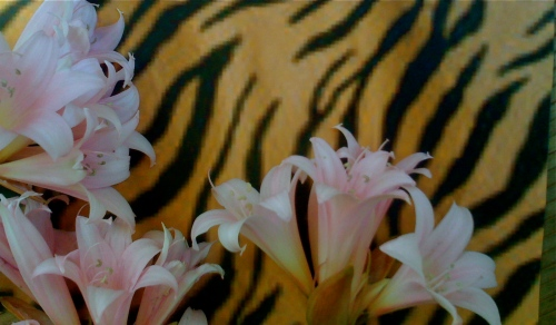 Tiger Lillies...