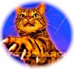 tabby-cat-paw_~413046