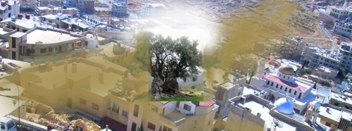 Ghost of the olive tree,Palestine