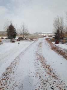 the driveway...