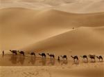 camel-caravan-libya_43370